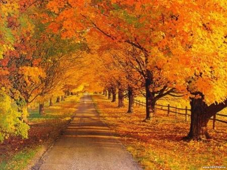 Записи Ольга.  50788. 50788 Осень радость.  Несколько советов, как радоваться осени.