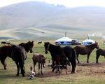 Моңғолия қазақтарының көшпенді бейнесі