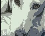 Мұхтар  Мағауин «Тазының өлімі»хикаятындағы  кейіпкерлер