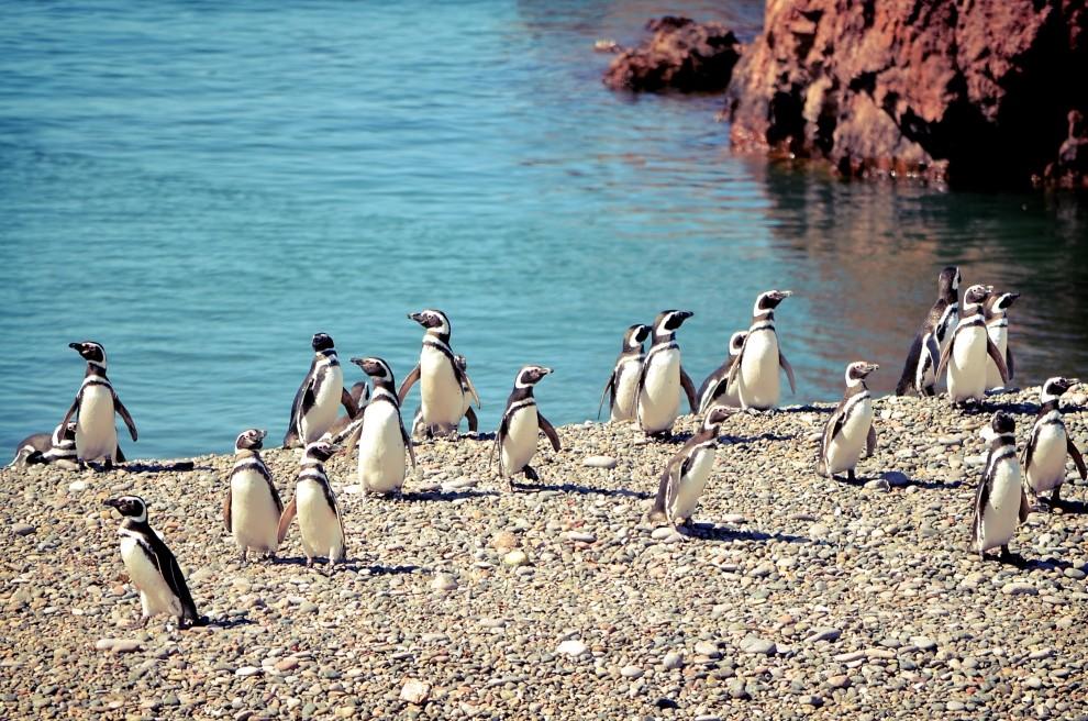Пингвиндермен жүздескіңіз келсе...