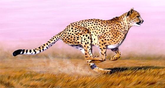 Ғалымдар гепардтың жылдамдығын өлшеді