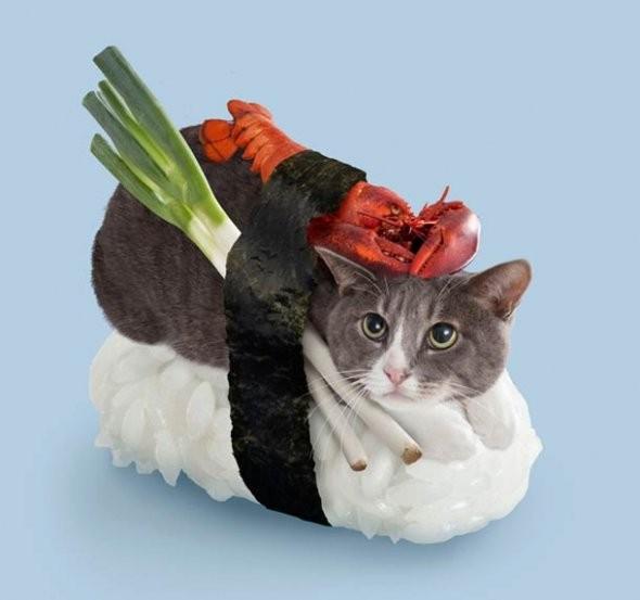 Жеуге жарамсыз мысық-суши
