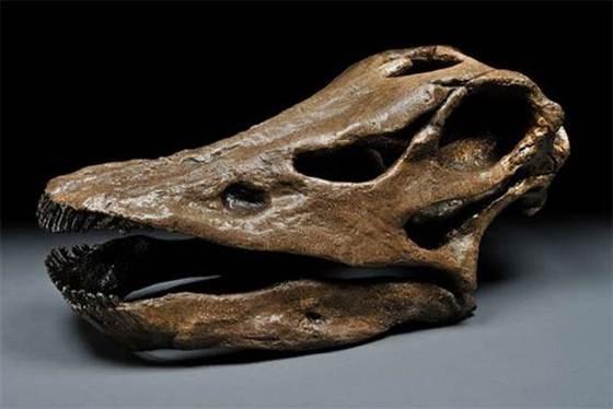 Динозаврларға үнемі жаңа тіс шығып отырған