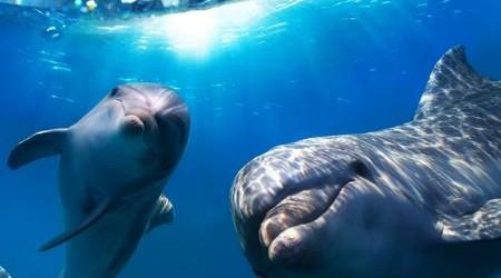 Дос болсаң дельфиндей бол!