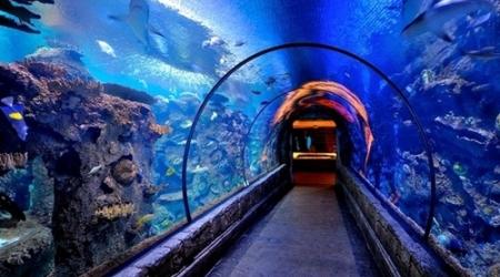 Әлемдегі алып аквариумдар
