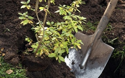 5 сәуір - Корей елінде ағаш егу күні