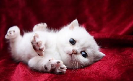 Өлімнен аман қалған кішкентай мысық интернетті жаулауда (видео)