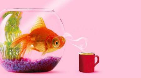 Күйзелістен шығаратын тағы бір жол – аквариум