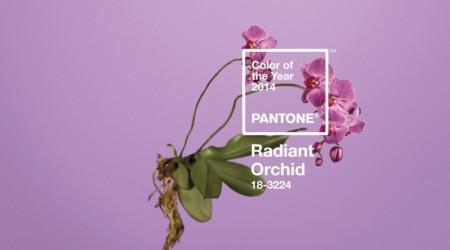 Pantone 2014 жылдың негізгі түсін анықтады
