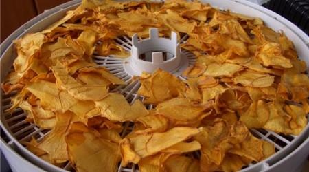 Шымкенттік ғалымдар жеміс-жидектен чипс жасап шықты