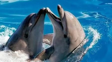 Кит пен дельфин жойылу алдында тұр