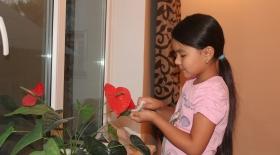 Қыз күнделігі: Бөлме өсімдіктерін күту
