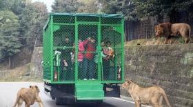 Бұл қызық: Қытайдағы хайуанаттар бағы