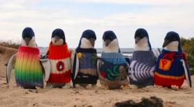 Кішкентай пингвиндерге жемпір тоқып берген жомарт жан