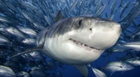 Акуланың асқазанынан шыққан ең ерекше заттар
