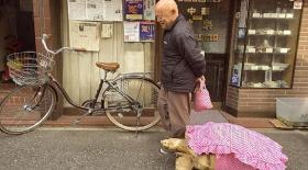 Токио тұрғыны тасбақамен бірге серуенге шықты