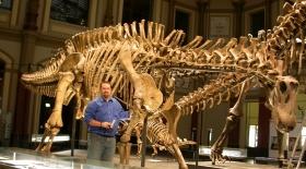 126 млн жыл бұрын өмір сүрген динозаврдың сүйегі табылды