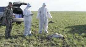 Қостанай облысында қырылған киіктердің саны 27 мыңнан асты
