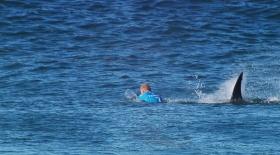 Бағы бар спортшы акуладан аман қалды (видео)