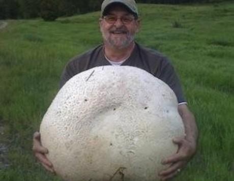 Канадалық 26 килограмдық саңырауқұлақ тапты