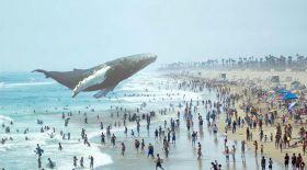 Еденнен кит шығуы мүмкін бе? (Видео)