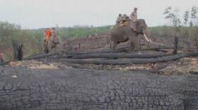 Индонезияда пілдер өрт  сөндірушілерге айналды