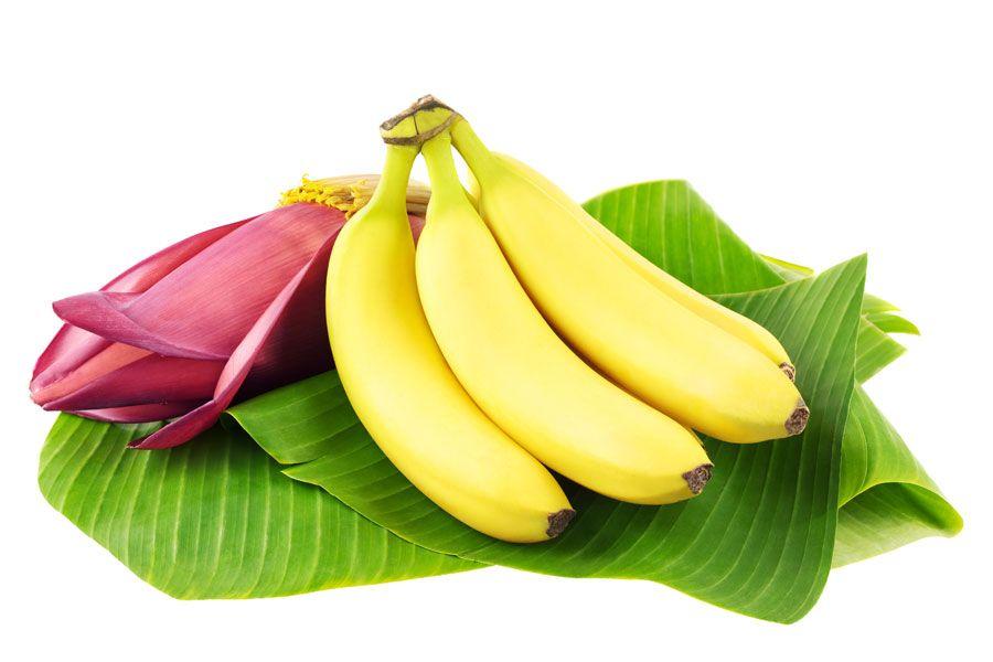 Бөлме өсімдігін күтуде бананның пайдасы
