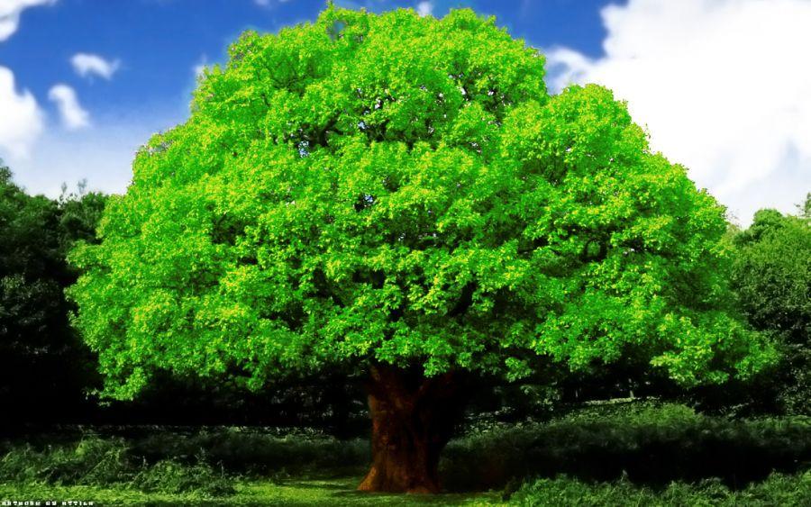 Сіз қай ағашты ұнатасыз? (Тест)