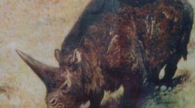 Әлемдегі ең жас мүйізтұмсықтың қаңқасы Павлодар облысында табылды