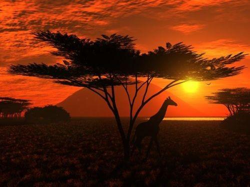 Африка Саванналары