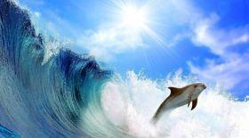 Бүгін – кит пен дельфин күні
