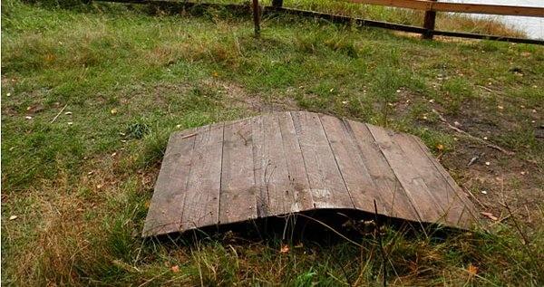 Белоруссия құмырсқаларға арнап тоннель салды