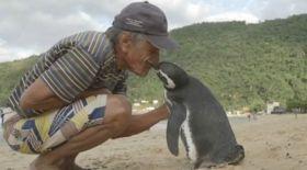 Өзін өлімнен алып қалған иесіне жылда 8000 км жерден келетін пингвин