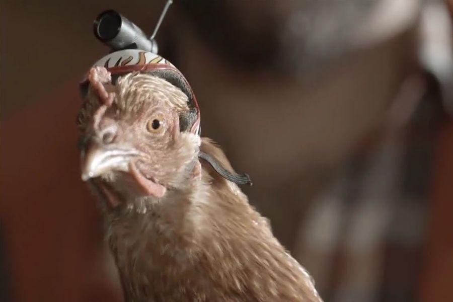 Болашақ: штатив орнына – тауық (видео)