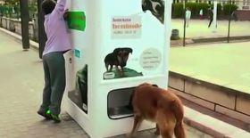 Көше иттерін тамақтандыратын автомат ашылды (видео)