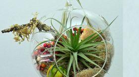 Ерекше сән беретін флорариум