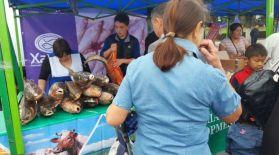 Алматыдағы жәрмеңкеге ОҚО шаруалары 320 тонна ауыл шаруашылығы өнімдерін әкелді