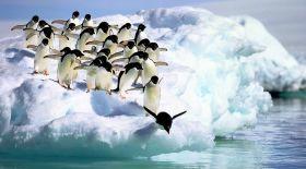 Ертеде пингвиндер ұша алатын болған