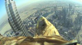 Бүркіт жанарындағы Дубай (видео)