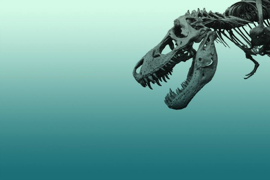 Жер бетінде динозаврлардың қанша түрі болған?