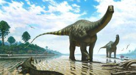 Янтарь тасынан динозаврдың құйрығы табылды