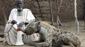 Африкалықтар асырайтын үй жануарлары