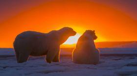 Антарктидадан осыдан 100 жыл бұрын түсірілген суреттер табылды