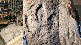 Швейцариядан 152 миллион жыл бұрынғы динозаврдың ізі табылды
