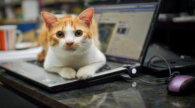 Интернет-мысық қалайсыз ба?