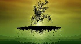 Емдік қасиеті бар ағаштар