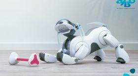 Sony жаңалығы: қабілетті робот-ит