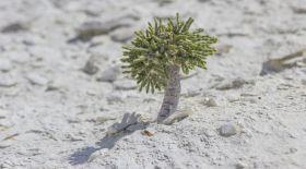 Қазақ даласындағы сырлы өсімдіктер