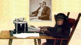 Кеңсе креслосын Чарльз Дарвин ойластырған