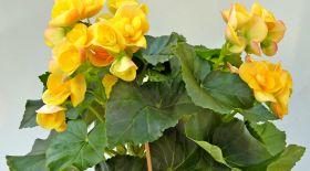 Сары түсті гүл тәбетті ашады
